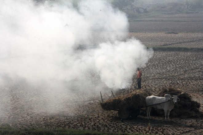 Stubble burning reaches new high