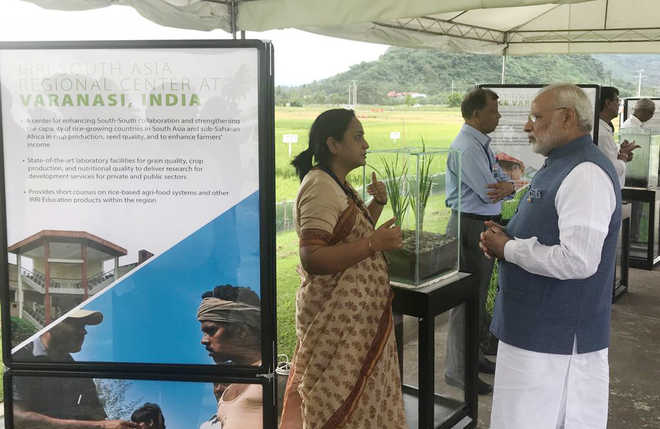 Modi contributes 2 rice varieties to Philippines centre's gene bank