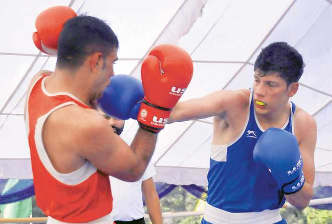 PU boxers continue to impress