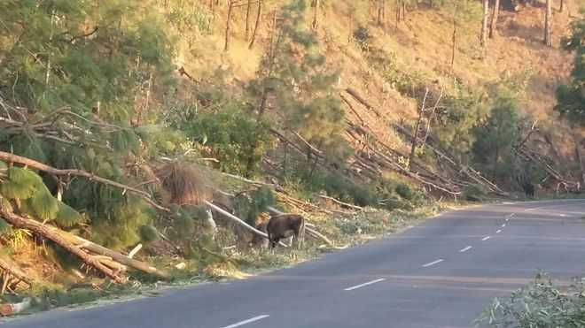3,000 trees to be felled for Rudraprayag road widening
