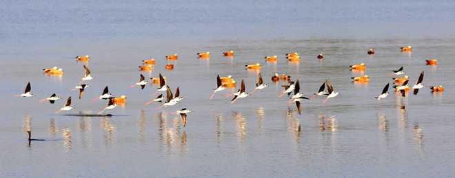 Sukhna to be declared wetland
