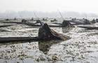 Kashmiri fishermen catch fish with harpoons in Anchar Lake on the outskirts of Srinagar on December 28. AFP