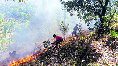 State braces itself to tackle forest fires
