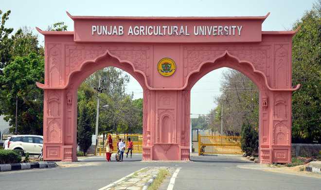 Image result for punjabi agriculture