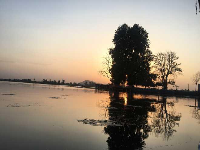 Kashmir's famed Char Chinari island dying a slow death
