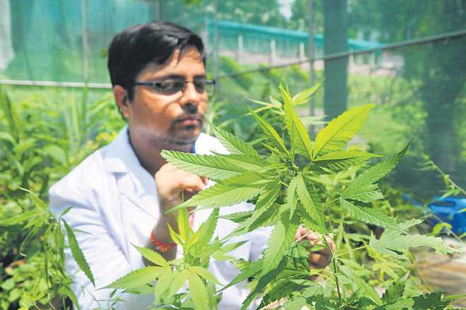 Medicine Marijuana?