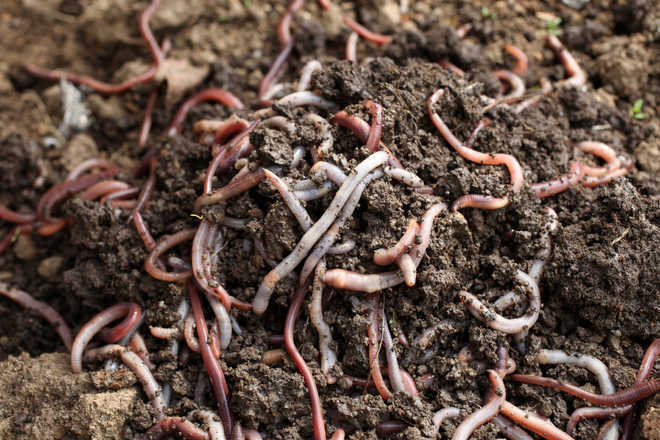 2 new species of earthworm discovered in Kerala