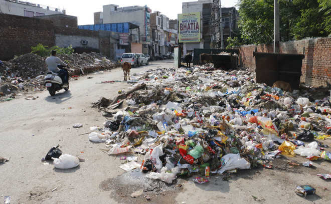 City stinks as garbage collection halts