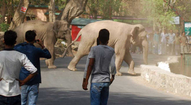Cases of man-elephant conflict on the rise