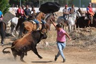 A man confronts a bull with an umbrella at the Toro de la Vega in the central Spanish town of Tordesillas, on September 12. AFP