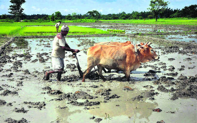 Climate change can sow agri distress