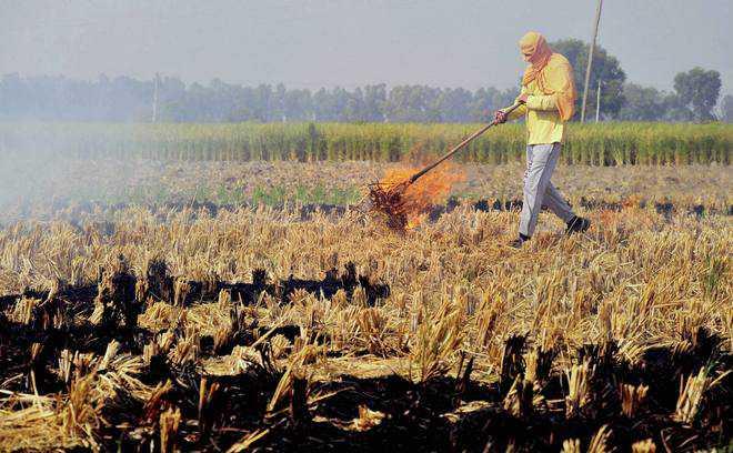 Farmers won't stop burning straw, but govt on the job