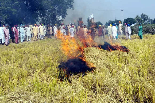 Farmers burn paddy straw in protest