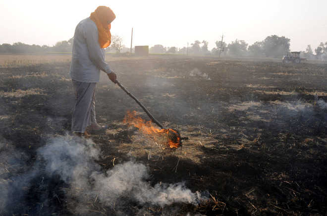 Farmers protest, defy stubble burning ban