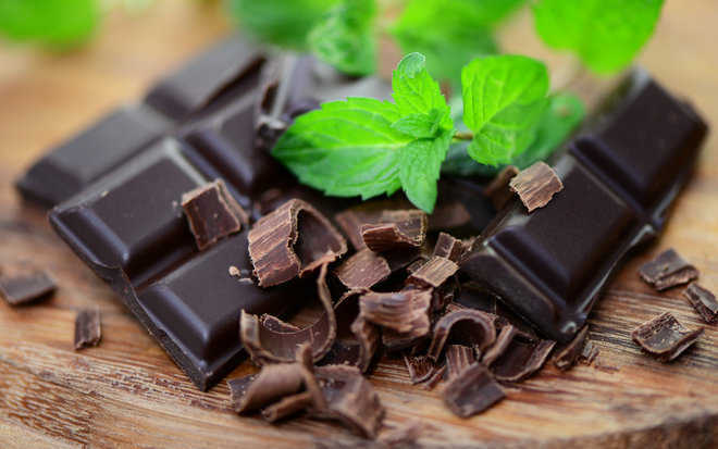 Humans grew ''chocolate trees'' over 3,600 years ago