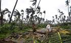 Women carry coconuts next to fallen palm trees after heavy winds brought by Cyclone Titli struck the area in Barua village in Srikakulam district of Andhra Pradesh on October 11. AFP