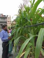 Rooftop kitchen garden catches fancy of residents