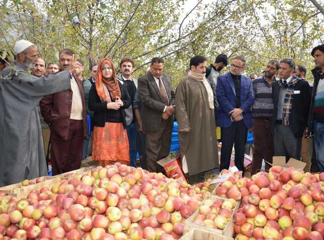Ganai inspects damaged orchards in Anantnag