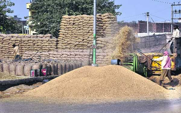 Farmers in trouble, agencies won't procure moist paddy