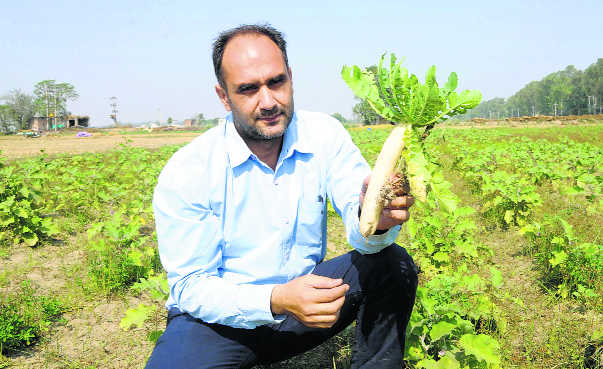 NRI returns to promote organic farming