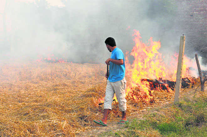 2,493 incidents in Nov, stubble fires far from out in state