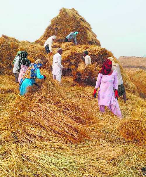 Karnal farmers show how to handle paddy straw