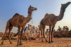 Pushkar Camel Fair 2018