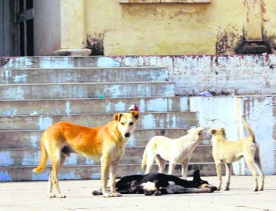 1 yr on, MC to start dog sterilisation drive in city