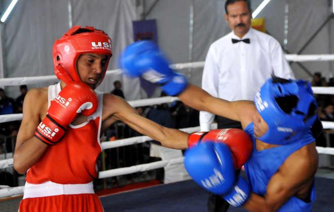 Punjab, Haryana boxers dominate in quarters