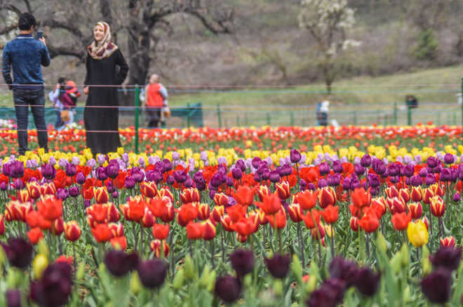 Valley can help cut flower import