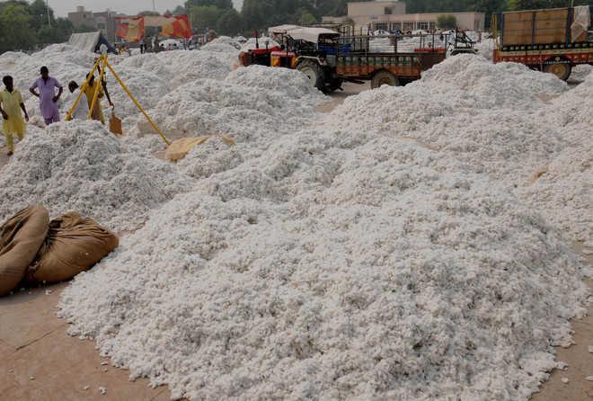 Cotton production falls short of initial estimate