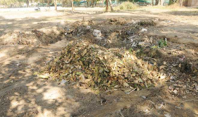 MC to install bio-manure processing plants in parks