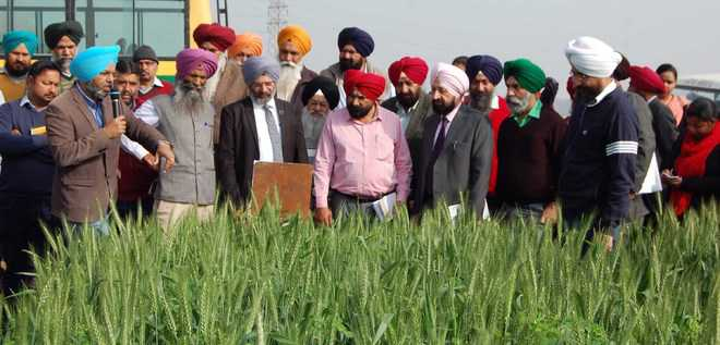 Training on seed production