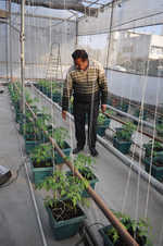 'Hydroponics can grow rooftop gardens'