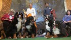 Owners and their dogs participate in a dog show in Chandigarh on February 10, 2018. Tribune Photo: Ravi Kumar