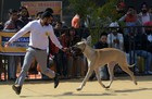 An owner and his dog participate at a dog show in Chandigarh on February 10, 2018. Tribune Photo: Ravi Kumar