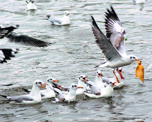 Bird arrivals at state wetlands remain constant at 1.25 lakh