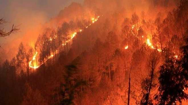 Dept gears up to tackle forest fires