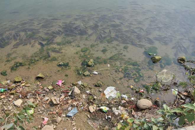 12,000-yr-old Mansar Lake struggling to survive