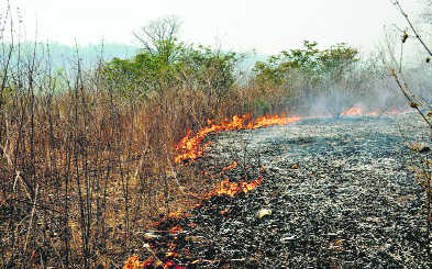 FSI carries out revamp of forest fire alerts system