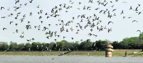 Urban areas crowded with 'nuisance' birds