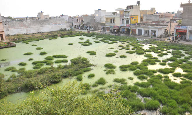 PPCB orders cleaning of ponds
