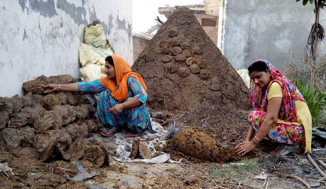 Meet the women entrepreneurs making money from cow dung