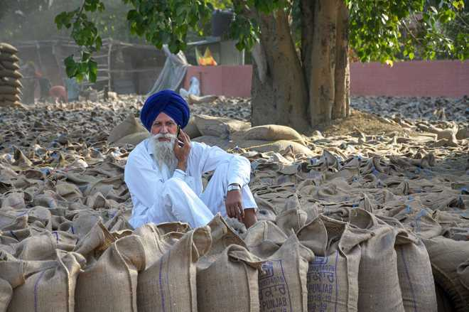 Here's why 50% of procured wheat lying in open in Punjab