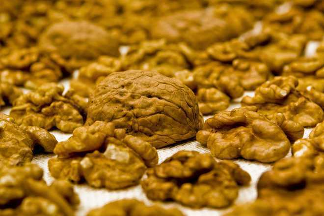 Walnuts may improve health by impacting gut bacteria