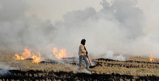 Burning of wheat straw rampant in dist farms