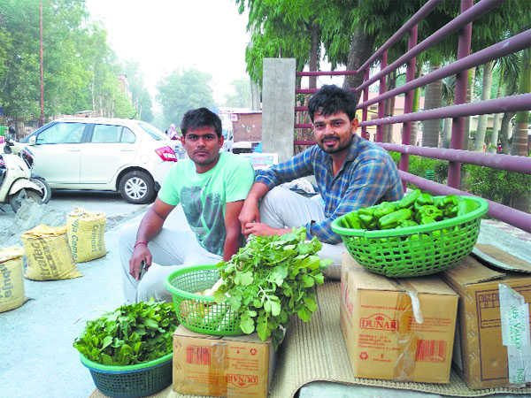 Rohtak youths quit MNC jobs for organic farming