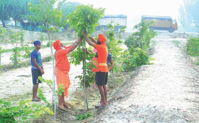 Herbal garden project to start soon in city schools