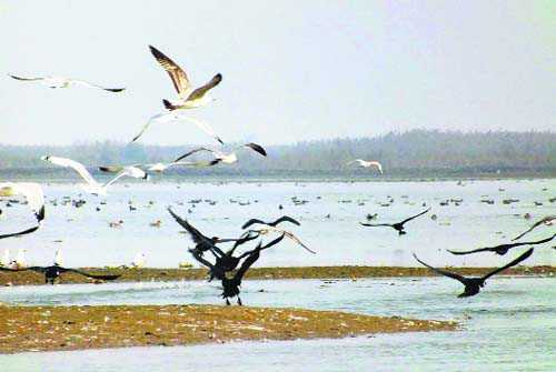 Ecology as Central subject? Punjab, 17 others say no