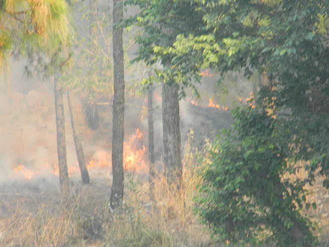 Forest fire rages near Kasauli IAF station